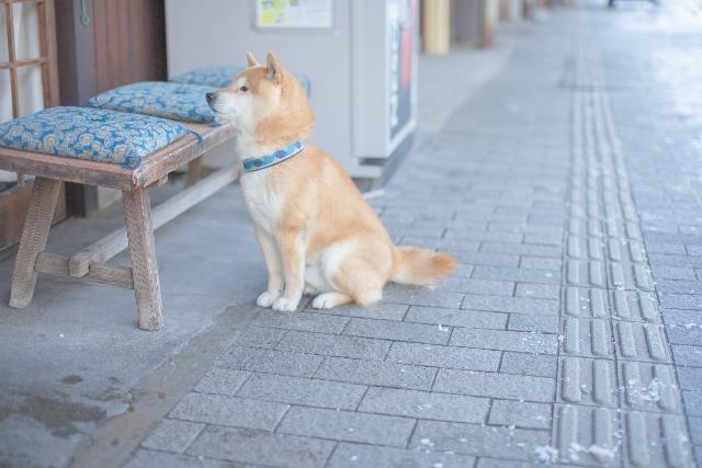 冬の街と犬