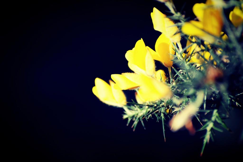 置かれた場所で咲く花