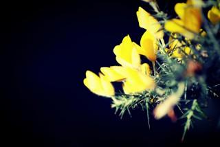 私のミッドライフクライシスを防ぐ。渡辺和子著・「置かれた場所で咲きなさい」