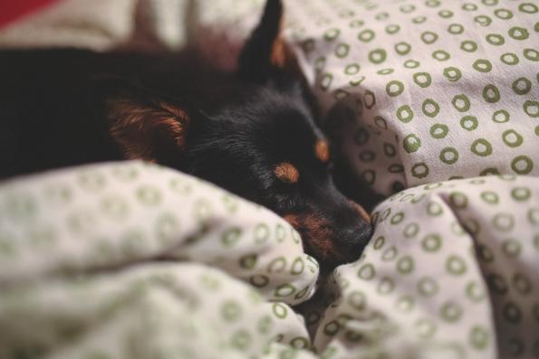 sleep-dog